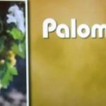 UVA_PALOMINO